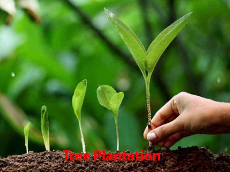 Tree Plantation Paragraph 1