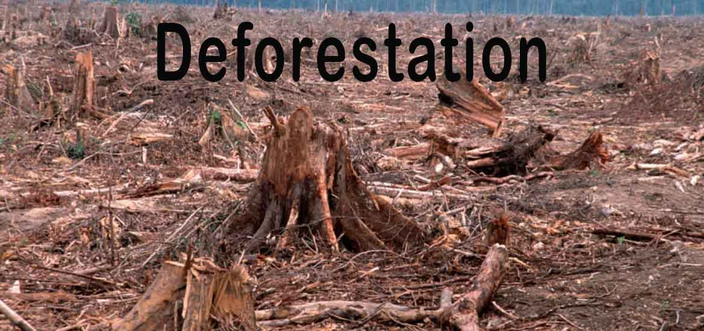Deforestation Paragraph